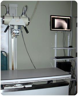 Radiology and Ultrasound
